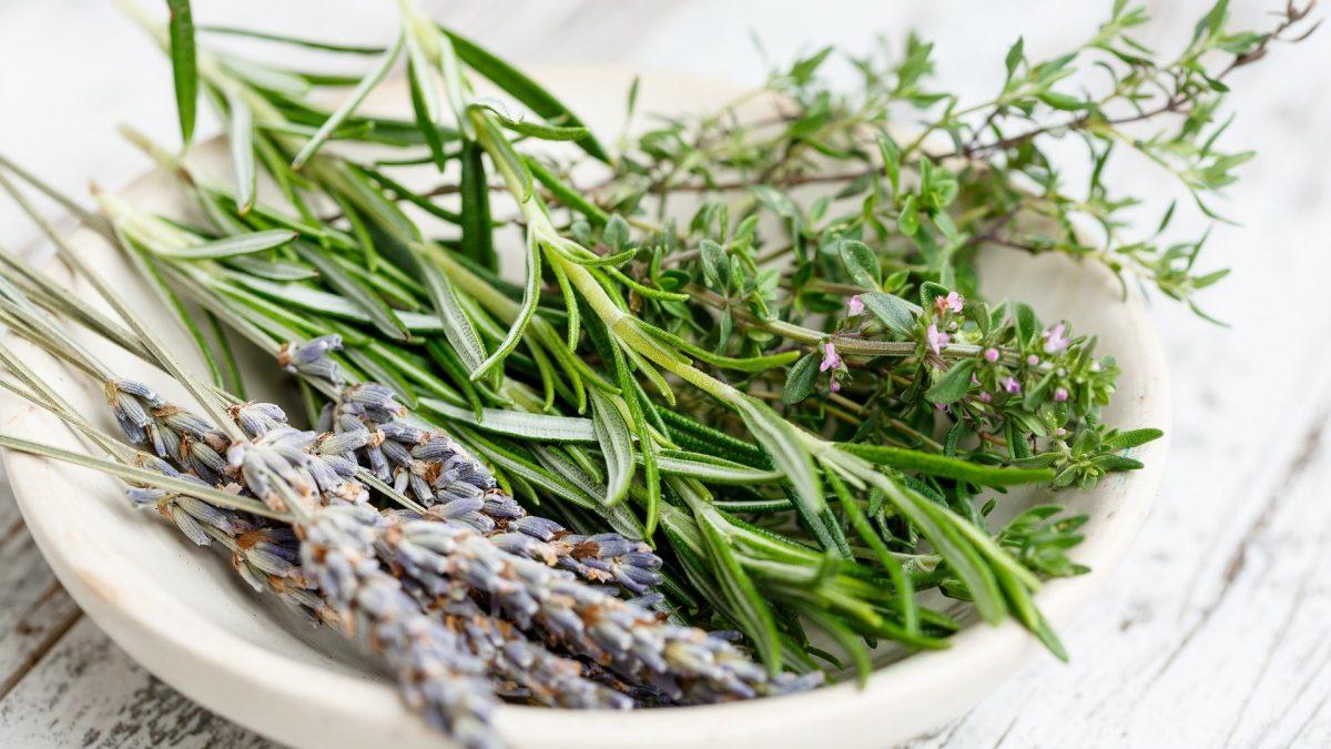 aromatic herbs of dalmatia