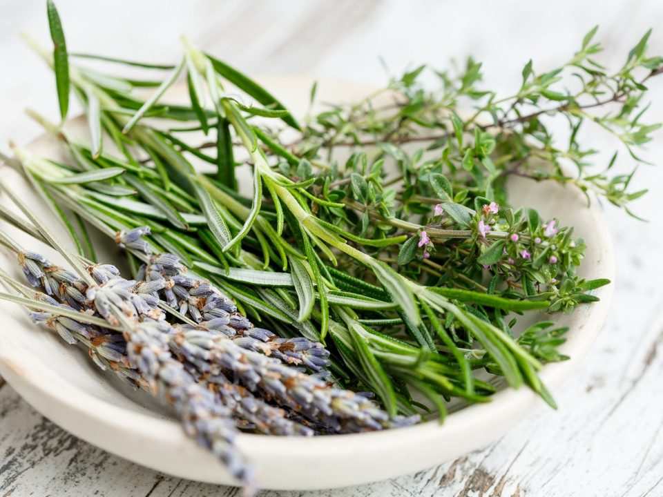 aromatic herbs of dalmatia